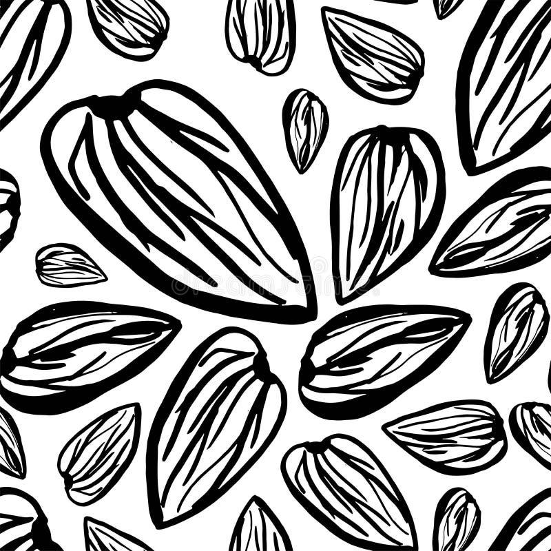 Sketch almonds pattern on white background. Seamless pattern background with dried almonds. Cute doodle vector illustration royalty free illustration