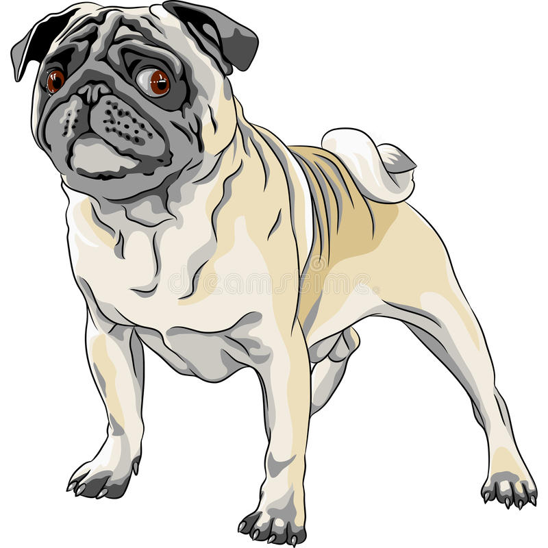 Download Sketch angry dog pug breed stock vector. Illustration of sketch - 28404801