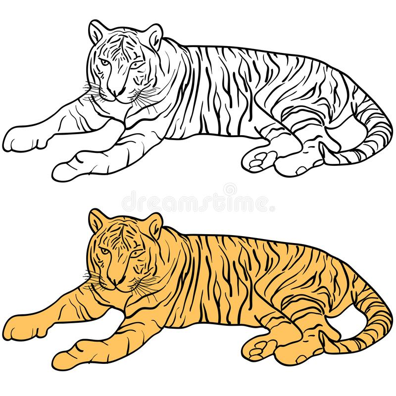 Sketch beautiful tiger on a white background. Vector illustration royalty free stock images