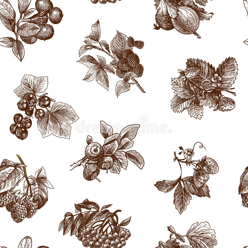Sketch berries seamless pattern. Natural organic berries set of strawberry blackberry cranberry sketch seamless pattern vector illustration stock illustration