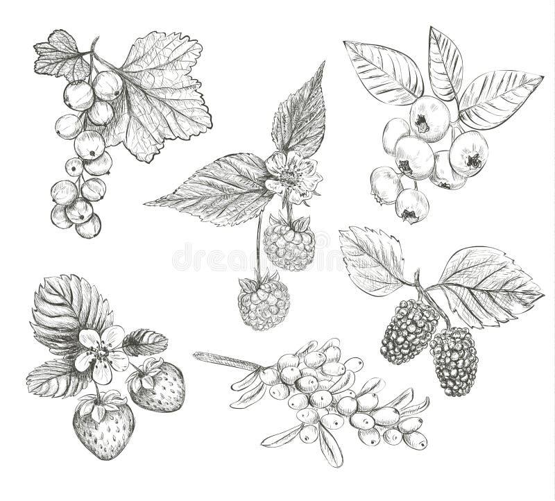 Sketch Berries set vector illustration. royalty free illustration