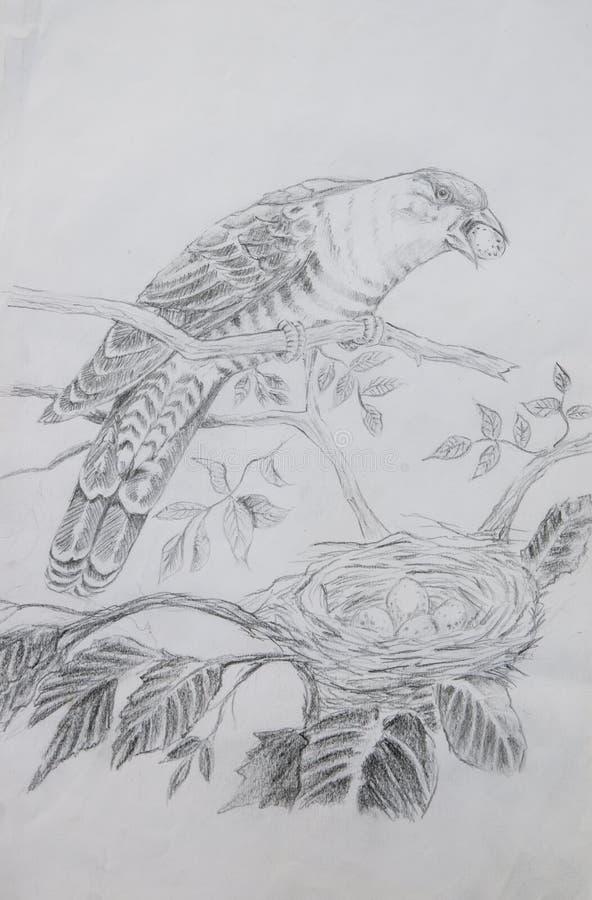 Download Sketch of bird stock illustration. Illustration of study - 29330389