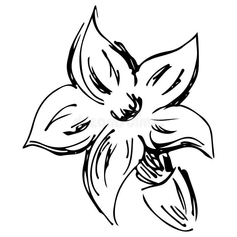 Sketch blossom lavender illustration. Hand drawn. Doodle, line art.  stock illustration
