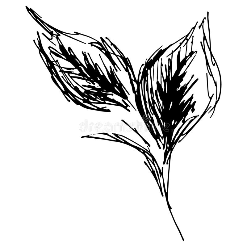 Sketch branch of leaves by hand on an isolated background. Hand drawn tea leaves stock illustration