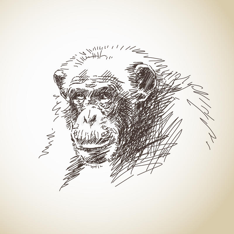 Sketch of chimpanzee royalty free illustration
