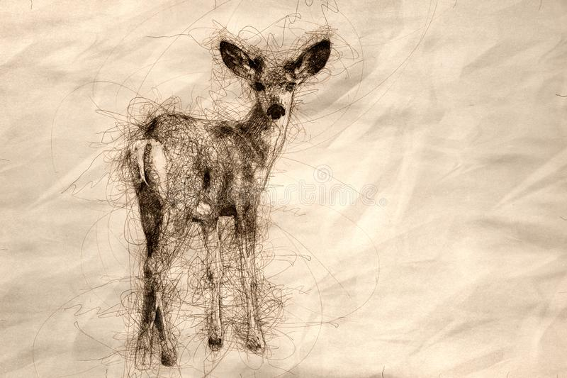 Sketch of a Curious Buck Deer Making Direct Eye Contact royalty free stock photography