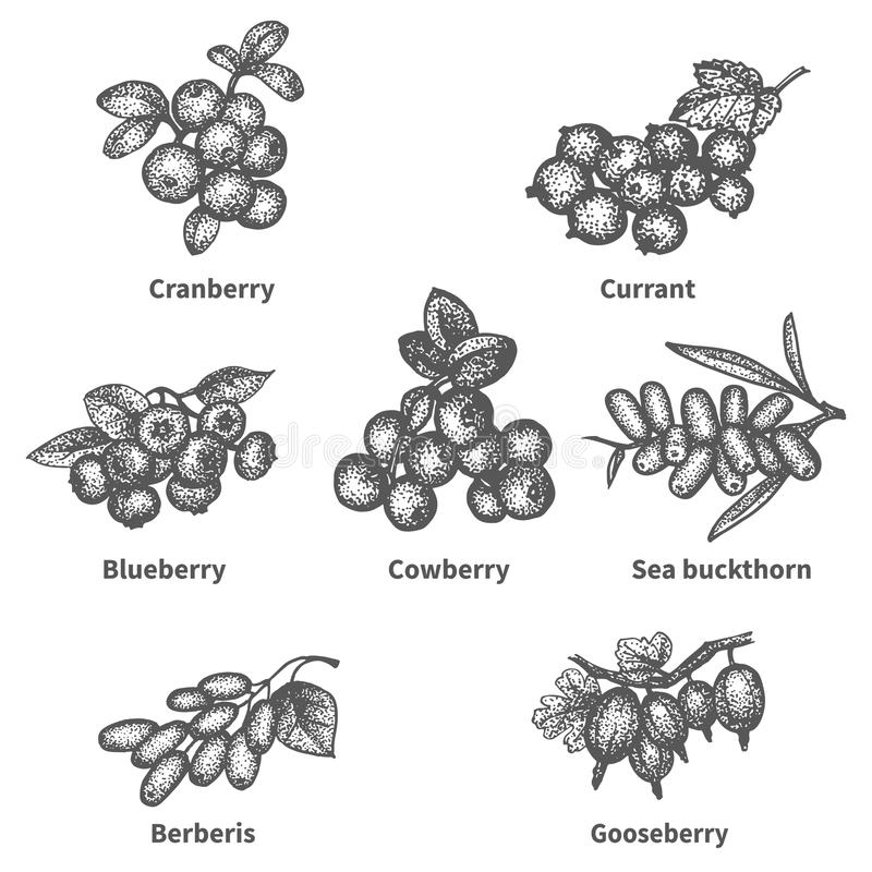 Sketch doodle hand-drawn set berries. Vector illustration sketch doodle hand-drawn set berries with an inscription. Isolated white background. Collection of vector illustration