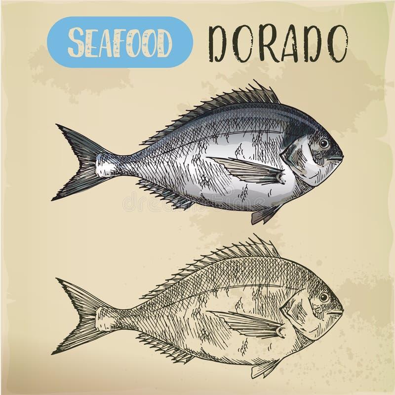 Sketch of dorado or mahi-mahi, dolphinfish. Mahi-mahi fish sketch or hand drawn dorado. Signboard with side view of dolphinfish for restaurant menu, vegetarian royalty free illustration