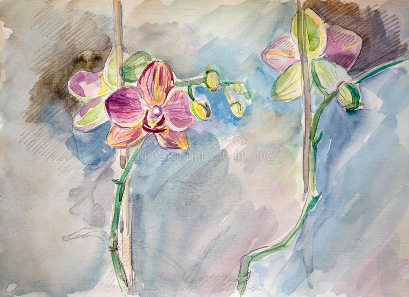 Sketch drawing pink Orchids watercolor and graphite pencil royalty free illustration