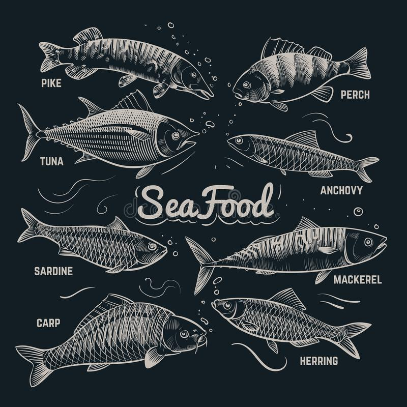 Sketch fishes seafood. Herring, trout, flounder, carp, tuna, sprat hand drawn outline fish vector collection in vintage. Style. Sea fish menu banner, herring royalty free illustration