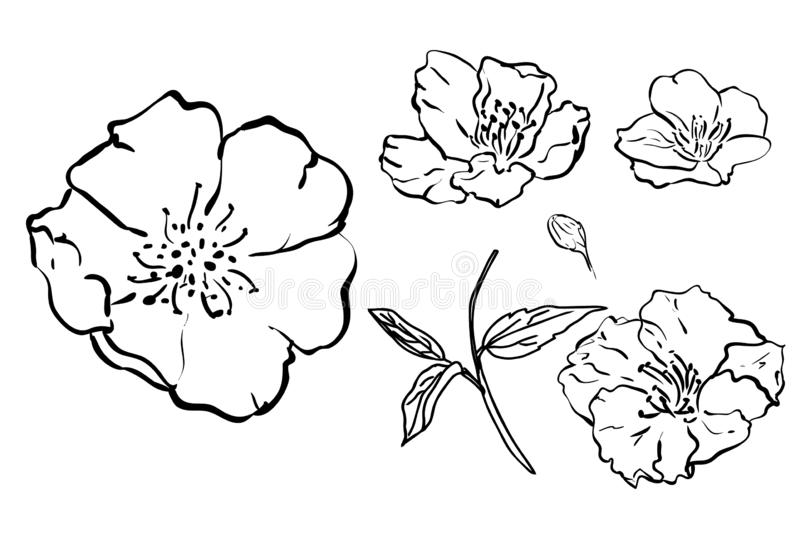 Sketch Floral Botany Collection. flower drawings. Black and white with line art on white backgrounds. Hand Drawn Botanical stock illustration