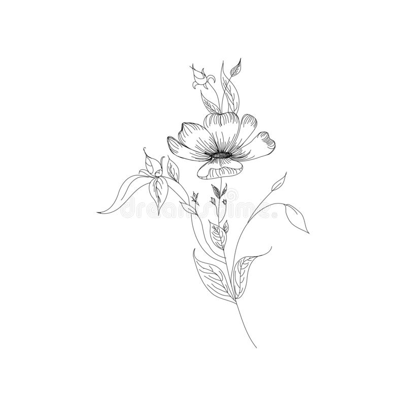 Sketch Floral Botany Collection. Flower drawings. Black and white with line art on white backgrounds. Hand Drawn Botanical vector illustration