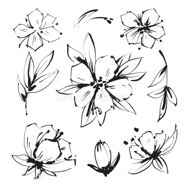Sketch Floral Botany Collection. Magnolia flower drawings. Black and white with line art on white backgrounds. Hand vector illustration