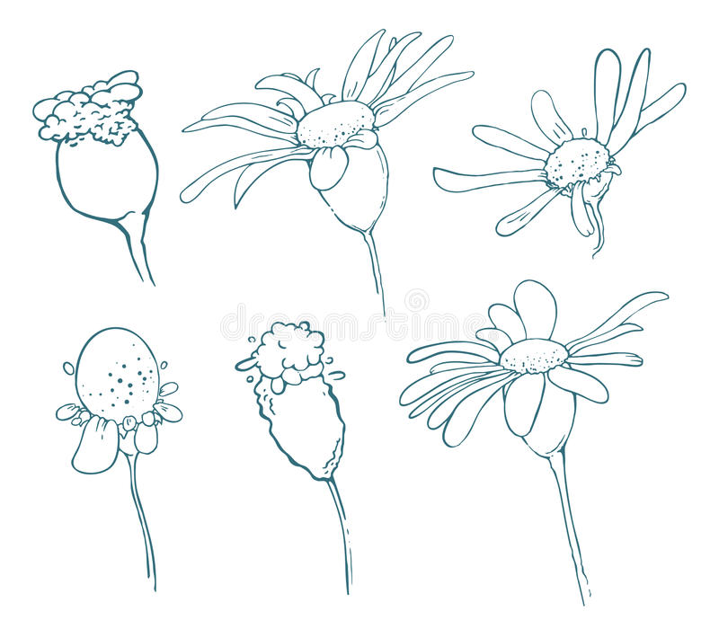 Sketch of floral elements for your design royalty free stock photos