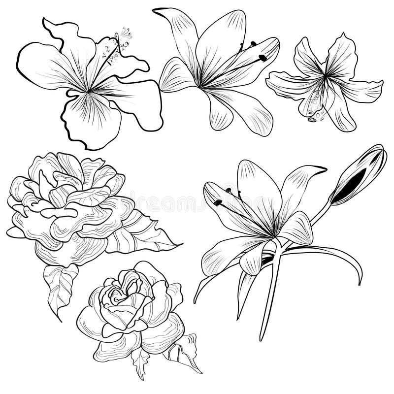 Sketch with flowers royalty free illustration