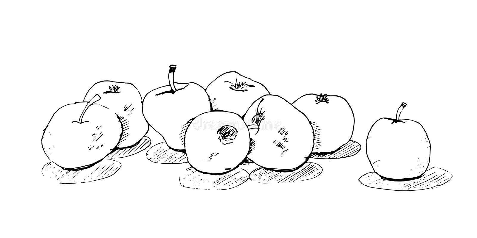 Sketch freehand, delicious juicy apples with shadow. stock illustration