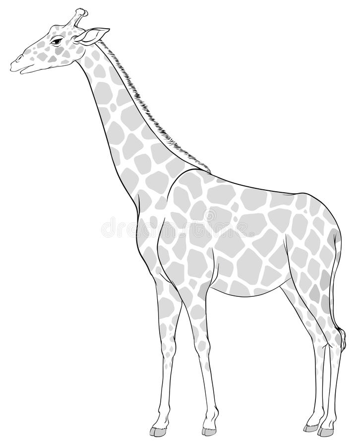 A sketch of a giraffe. Illustration of a sketch of a giraffe on a white background stock illustration