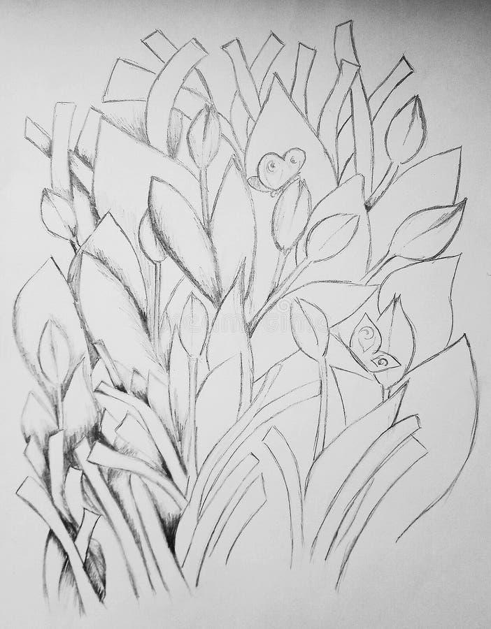 Sketch of growing tulips. Sketch growing tulips sketching flowers art pencil