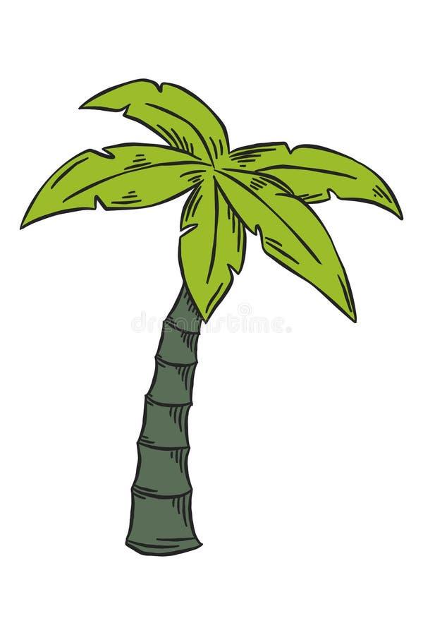 Sketch hand illustration Palm tree in green color vector illustration