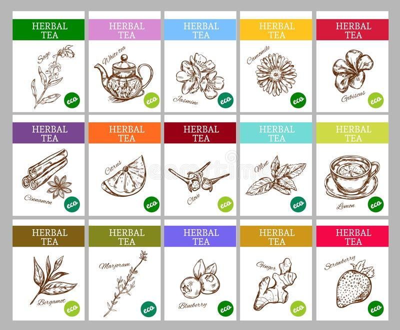 Sketch Herbal Tea Labels Collection royalty free illustration