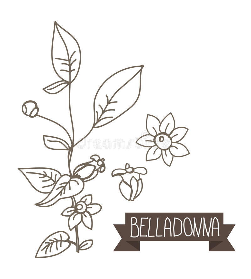 белладонна раскраска растение упоминала ней слова