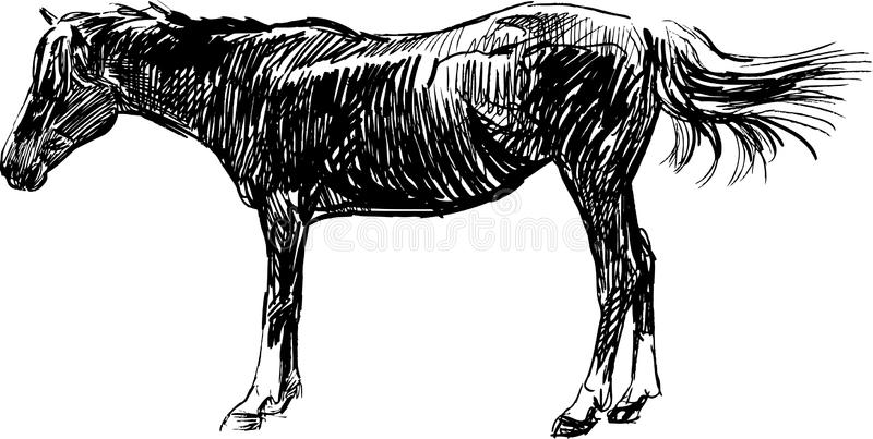 Download Sketch of horse stock image. Image of horse, isolated - 31905115