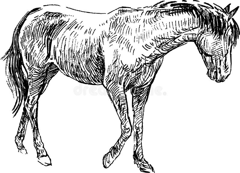 Sketch of horse vector illustration