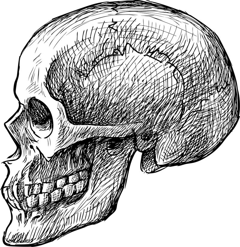 download sketch of human skull stock photo image of danger sketch 33411702