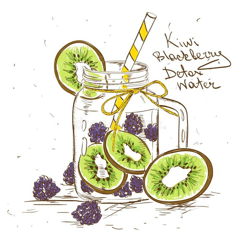 Sketch illustration of Kiwi Blackberry detox water. Hand drawn sketch illustration with Kiwi Blackberry detox water. Healthy lifestyle concept stock illustration