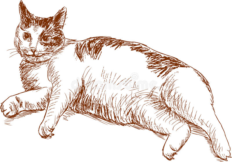 Sketch of a lazy cat. Vector drawing of a lying domestic cat royalty free illustration