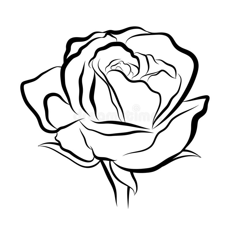 sketch line drawing of rose stock vector illustration of romance rh dreamstime com vector line art free vector line art file