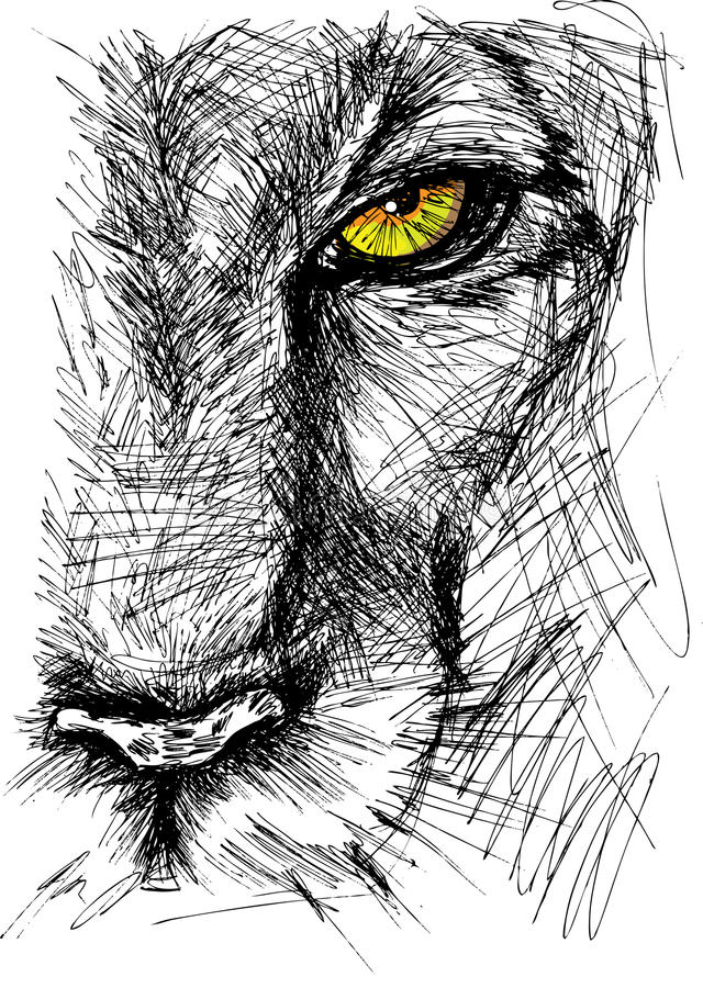 Sketch of a lion. Hand drawn Sketch of a lion looking intently at the camera. Vector illustration stock illustration