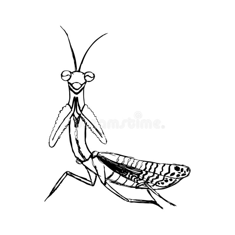 Sketch of a mantis in black lines. For the design of T-shirt, postcard, print royalty free illustration