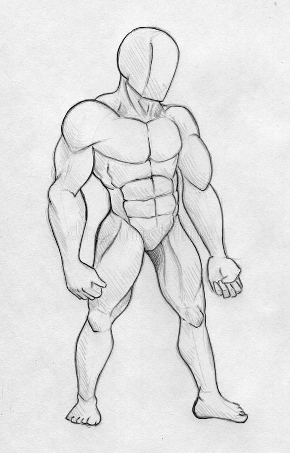 Download Sketch Of A Muscular Man - Front View Stock Illustration - Image: 42304195