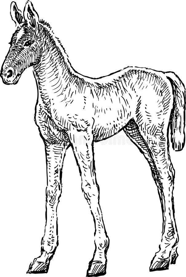 Free Sketch Of A Newborn Foal Stock Photography - 102880782