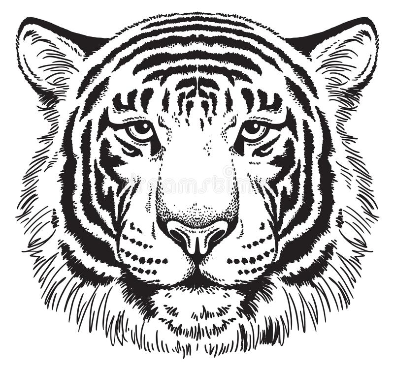 Free Sketch Of A Tiger&x27;s Face Stock Images - 141098294