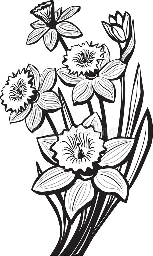 Free Sketch Of Narcissus Flowers Stock Photos - 19061353