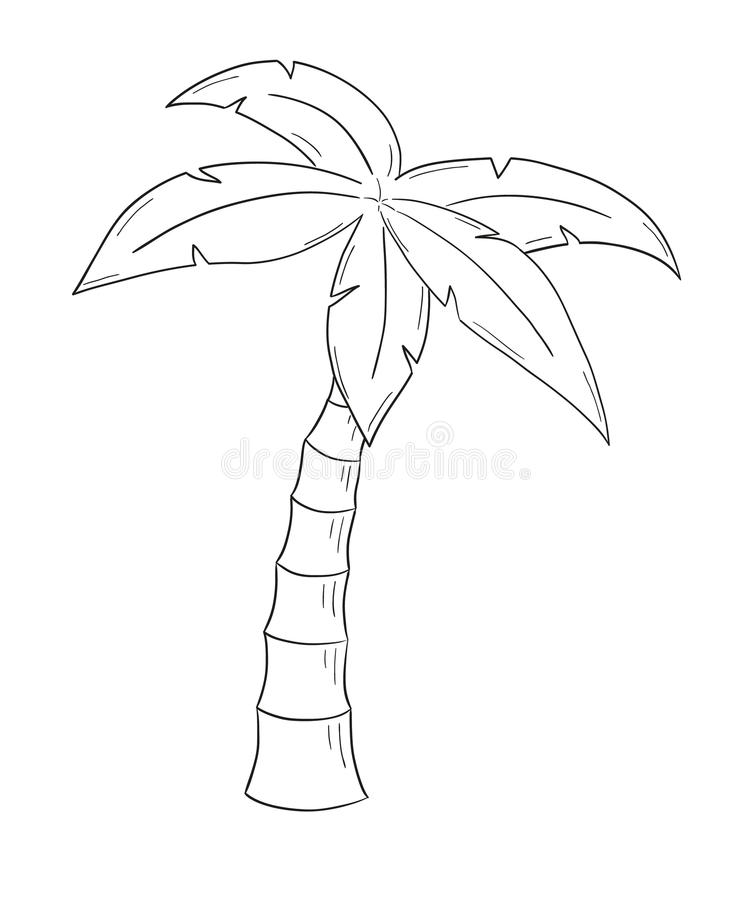 sketch of the palm tree stock vector illustration of