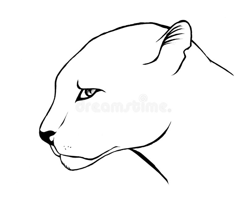 Sketch of panther stock photography