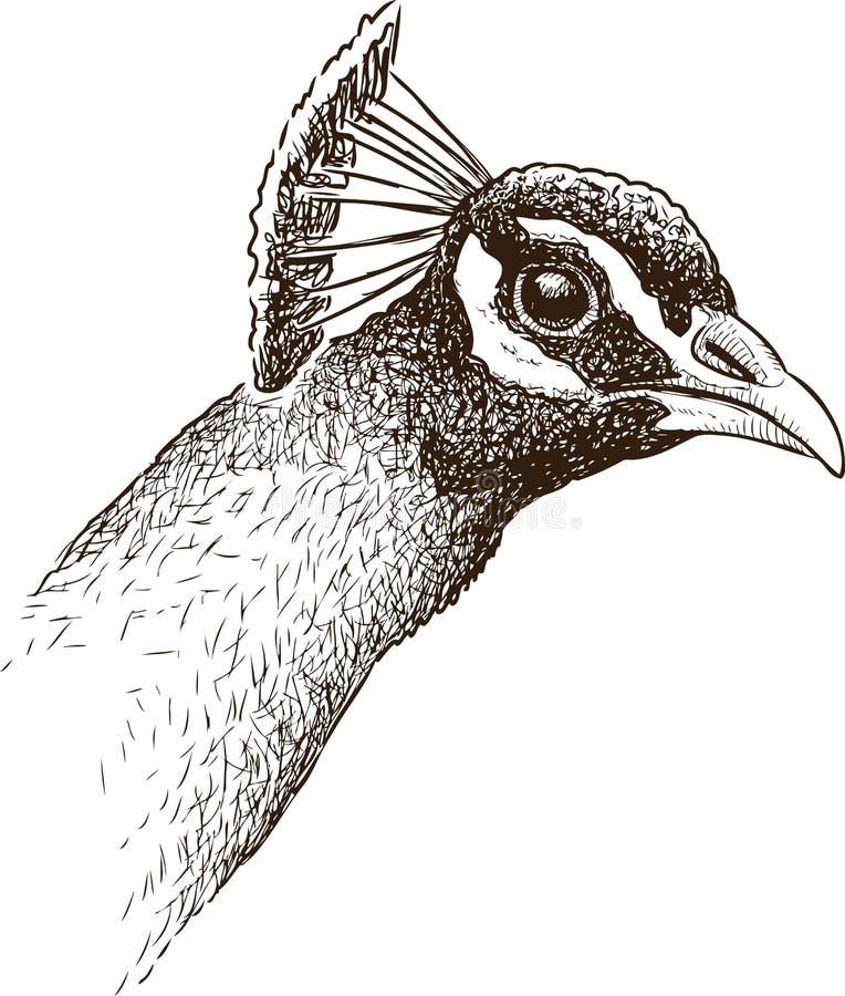Sketch of a peacock head vector illustration