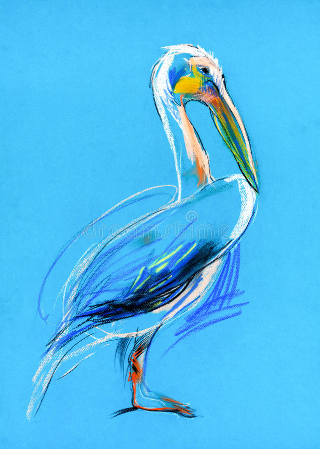 Sketch of a pelican stock illustration