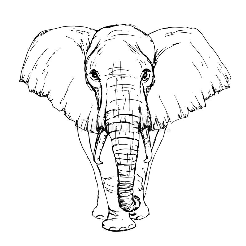 Sketch by pen African elephant front view royalty free illustration