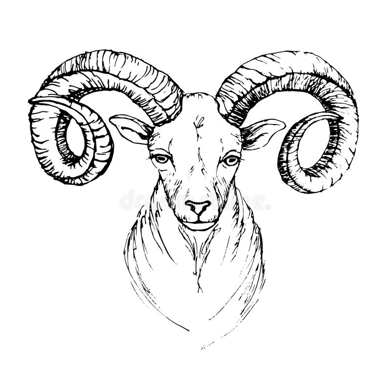 Download Sketch By Pen Head Of A Mountain Goat Stock Vector