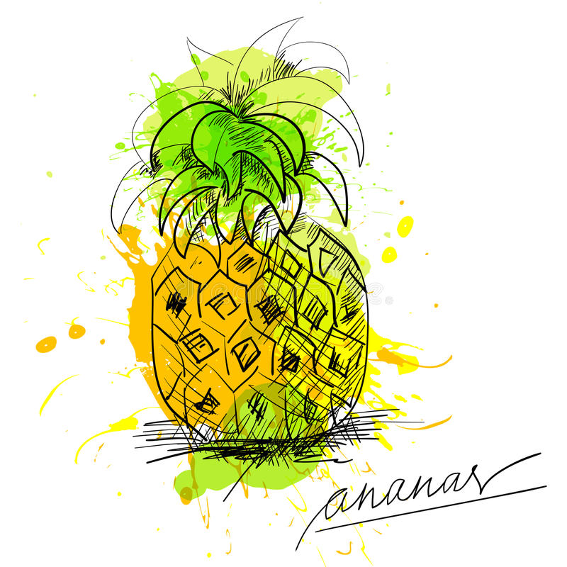 Download Sketch of pineapple stock vector. Image of dots, sour - 20689248