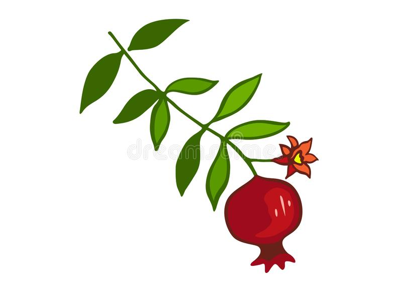 Sketch with pomegranate on branch with green leaves and flower. vector illustration