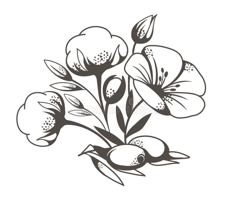 Sketch Of Poppy Flowers Stock Vector Illustration Of Sketch