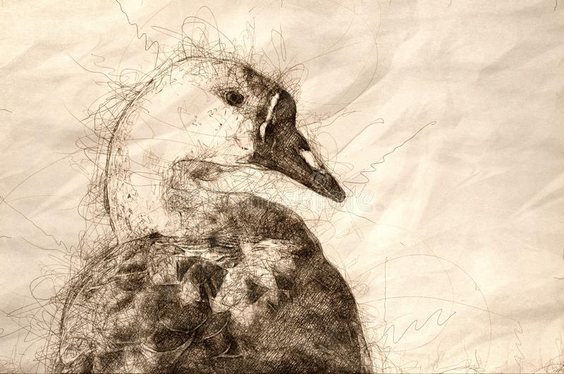 Sketch of the Profile of a Young Chinese Goose on the Waters of a Peaceful Pond. Sketch of the Profile of a Young Chinese Goose on the Waters of a Peaceful and royalty free stock image