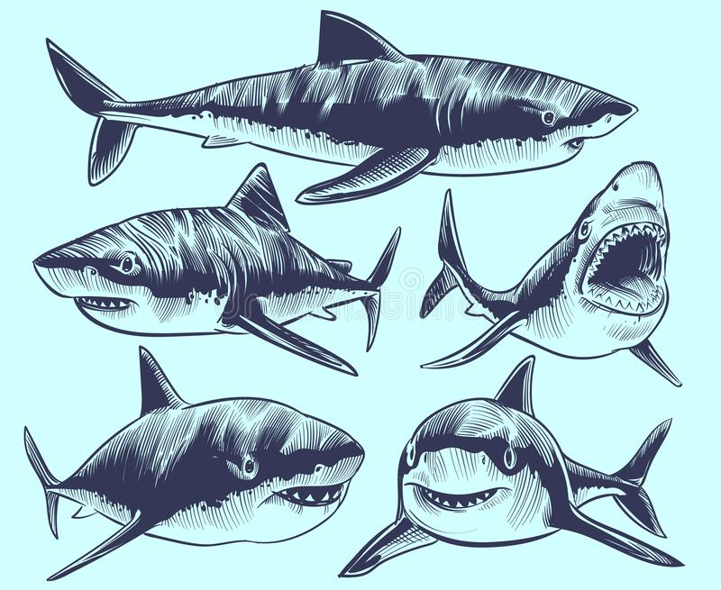 Polynesian Sharks Mouth By Cameron Rutten: Shark Tattoo Stock Vector. Illustration Of Hunting