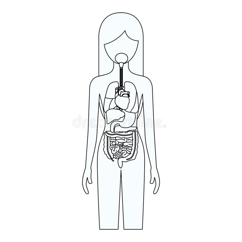 Sketch silhouette of female person with internal organs system of human body. Vector illustration vector illustration