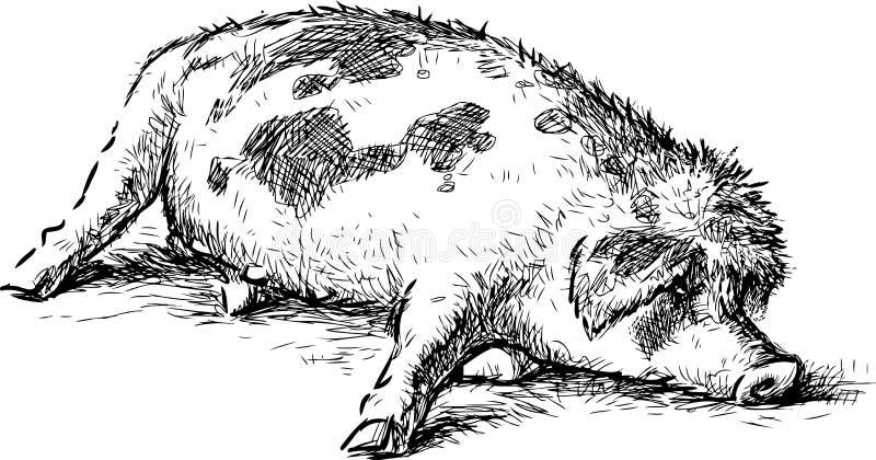 Sketch of sleeping lazy cartoon pig. Vector drawing of a funny lying swine vector illustration